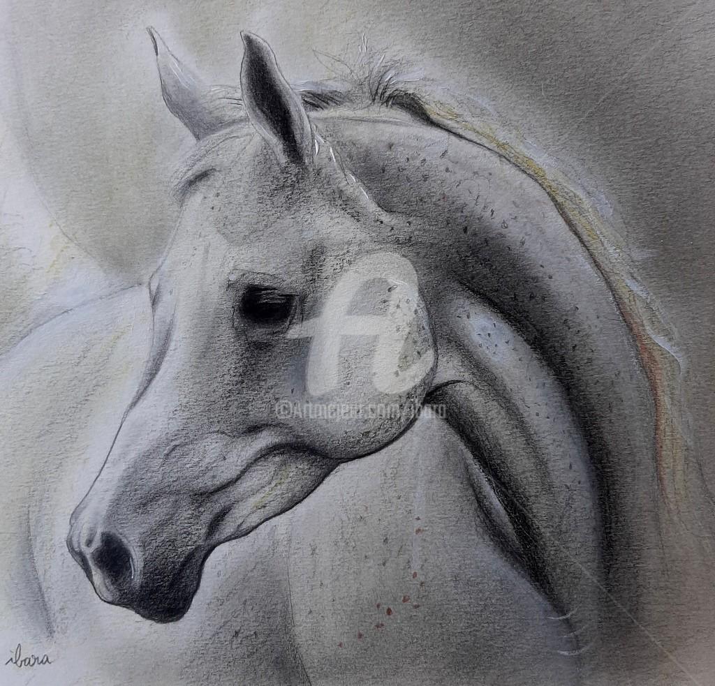 Henri Ibara - Tête de cheval arabe N°1